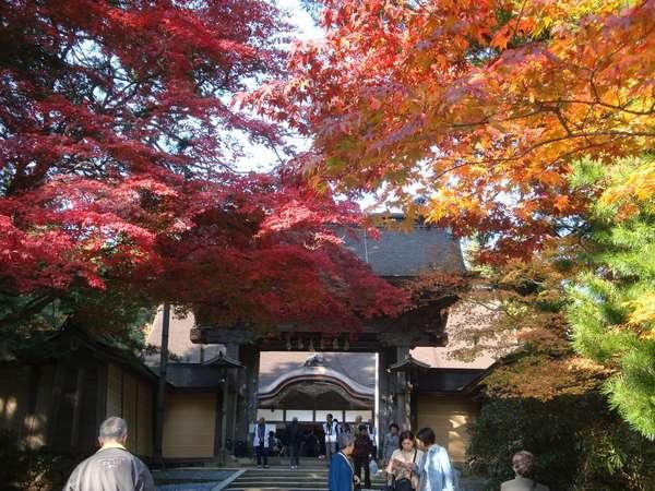 ◆高野山・金剛峯寺の紅葉の様子。