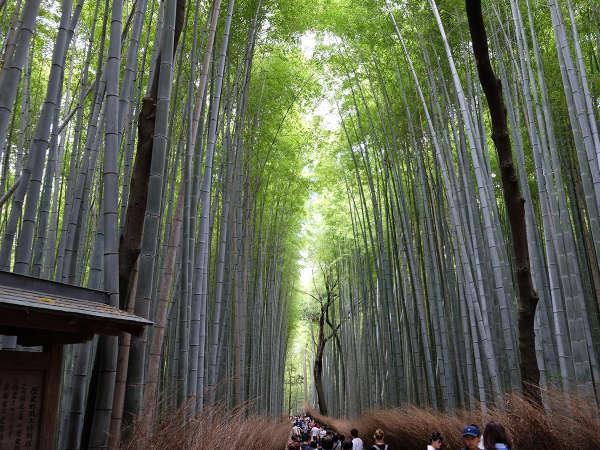 嵐山には素晴らしい竹林があり、12月に京都嵐山花灯路雨のライトアップがあります! 必見ですよ♪