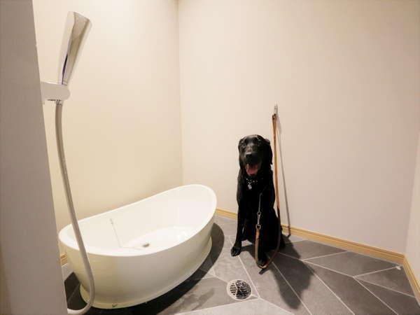 足洗い場があるので、お散歩をはりきりすぎてしまってもすぐに洗える