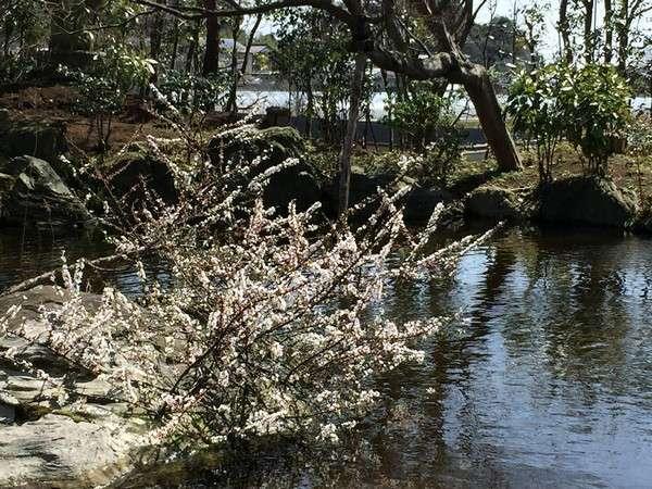 日本庭園。季節によりいろいろな顔を見せてくれます。