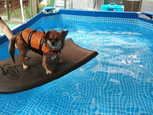 夏限定!! ドッグテラスでのプール遊び