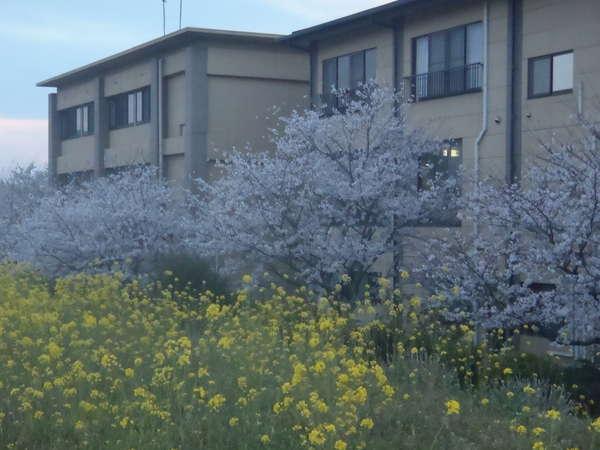 【旅館 とよとみ】博多の奥座敷「原鶴温泉」7つのW美肌の湯めぐりが自慢のお宿♪