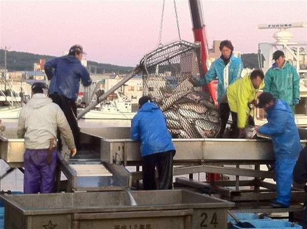 9月中旬から11月頃まで、紋別港では鮭の水揚げが盛んです。天気のいい日は紋別港へお散歩はいかが?