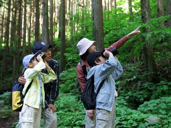 野鳥のさえずりを聴きながら森林浴をお愉しみください。(イメージ)