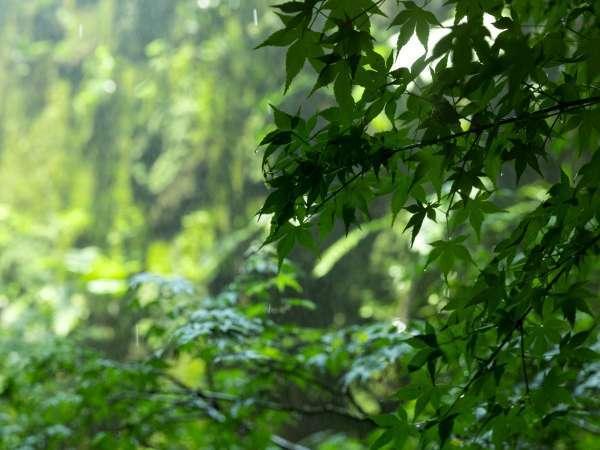 【ビューバスツイン】植栽を施した緑の壁面をご覧いただけます(イメージ)