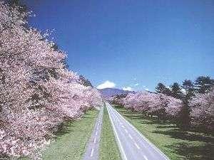日本一の桜並木、二十間道路の桜まで車で15分♪大勢の観光客が訪れます。