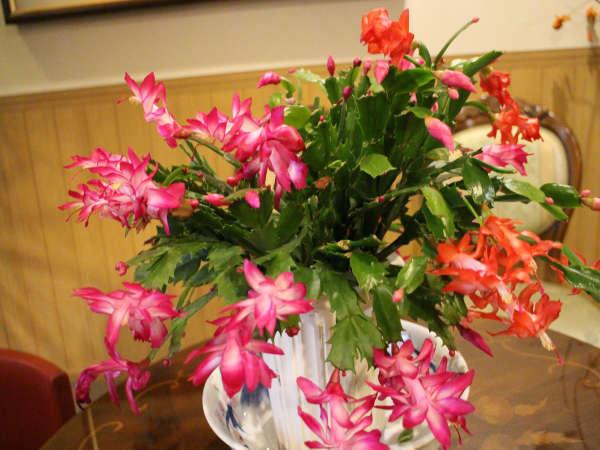 吾亦紅は四季折々の花々が、
