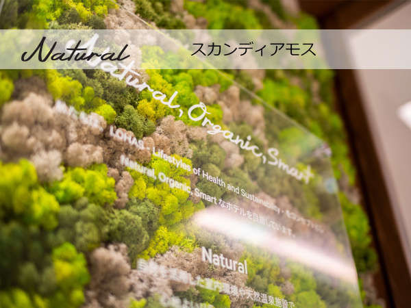 【Natural】生きているモス(苔)は美観だけではなく、空気清浄の効果も期待できます!