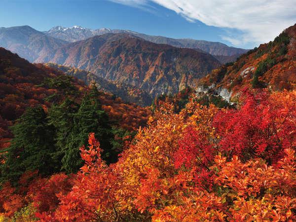白山白川郷ホワイトロードの紅葉<10月上旬~11月上旬>