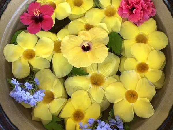 綺麗な花々が1年中見られます
