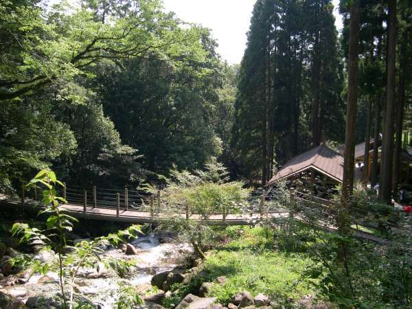キャンプ場は緑に囲まれた大自然の中にあります!