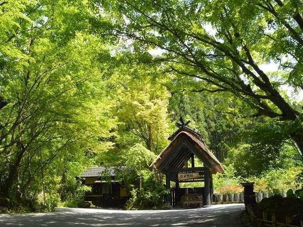 【温泉地獄/新緑】玄関すぐ横で湯けむりあげる風景にホッとする。