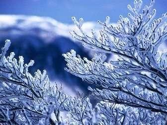 【御在所岳】冬の芸術♪♪樹氷御在所岳山頂にてご覧頂けます。(1~2月)