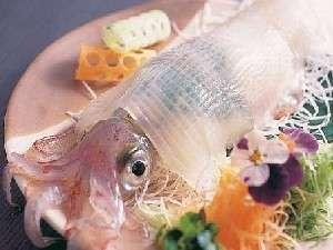 踊る元気な活イカの姿の見てからお料理開始