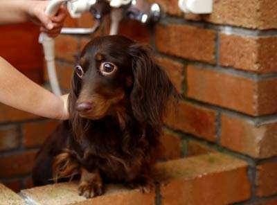 ワンチャン専用露天風呂。シャワーでさっぱり。