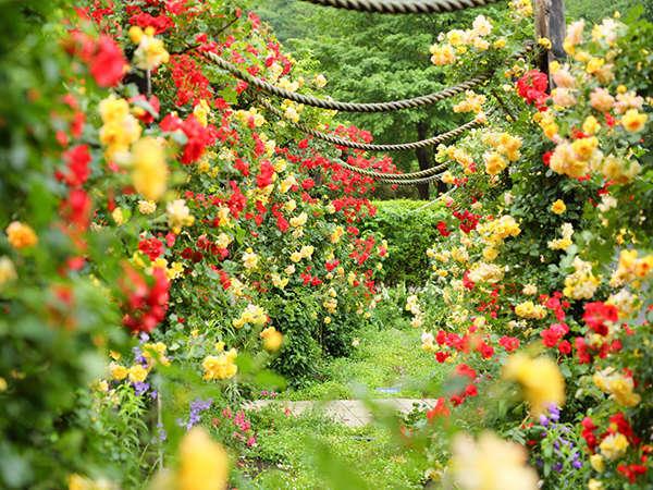 【アカオハーブ&ローズガーデン】華やかで美しいローズシーズンは5月~6月が見頃(宿泊者割引、送迎付)