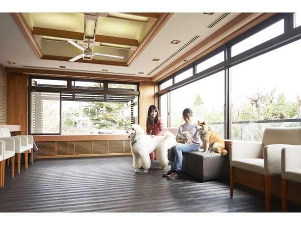 屋内愛犬コミュニティ広場:雨が降っても愛犬と遊べます♪愛犬同士の交流の場やお客様との出会いも!