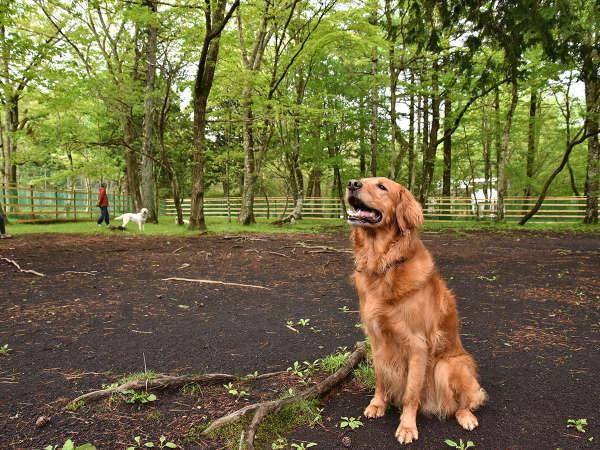 *【ドッグラン】2000坪の広大な敷地。大、中型犬用2面、小型犬用1面で小さなわんちゃんも安心◎