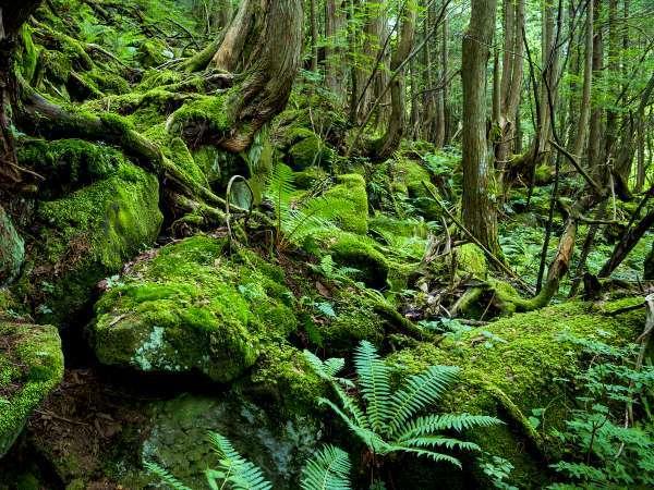 <蓼科大滝遊歩道>蓼科大滝遊歩道は苔の森に囲まれた自然豊かな観光スポットです