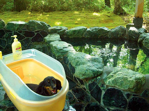 ペットといっしょに貸切温泉露天を満喫