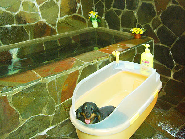 内風呂もワンちゃんとご一緒に