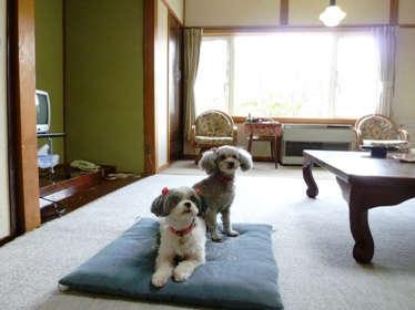 ペットと同伴専用のお部屋