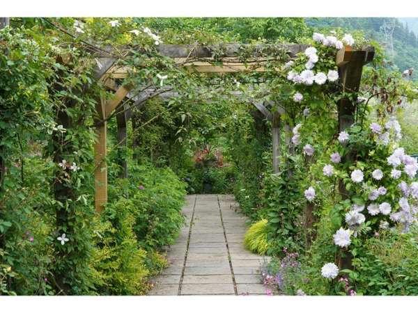 ガーデンのパーゴラは季節で異なる写真スポットです!