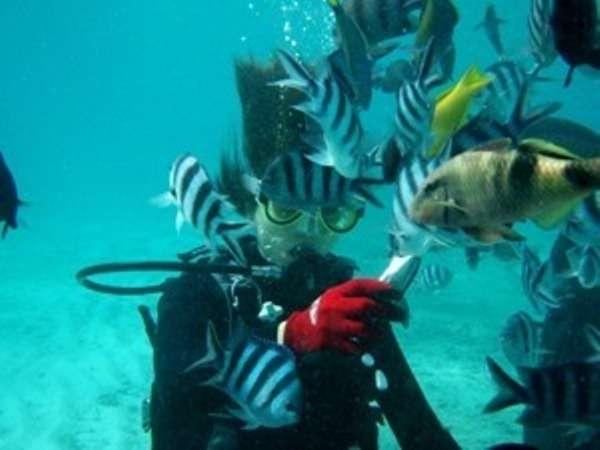 体験ダイビングで魚に餌付け