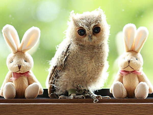 小さなお子様でも触れ合える小型ふくろうの桃です。詳細は当館公式HP(keisuikan.com)で確認
