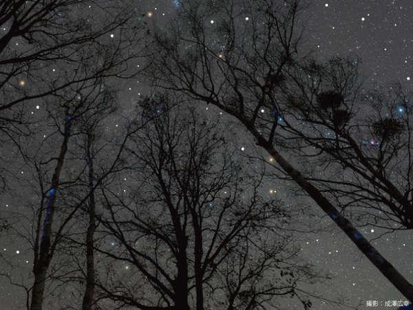 標高約1,000mの森の中だから見られる宝石箱のように輝く満天の星空