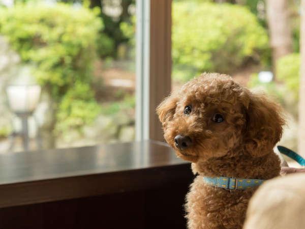 【愛犬と過ごす本格旅館 月香】特別室&個室食のオールインクルーシブプランが人気♪
