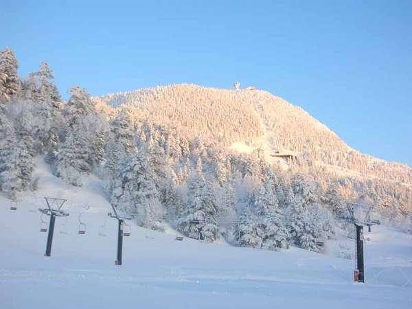*標高1800mの横手山は、良質なパウダースノーに恵まれています。