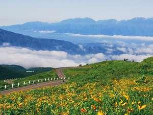 満開のニッコウキスゲと雲海 7月中旬
