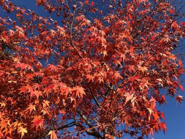 矢ヶ崎公園の紅葉