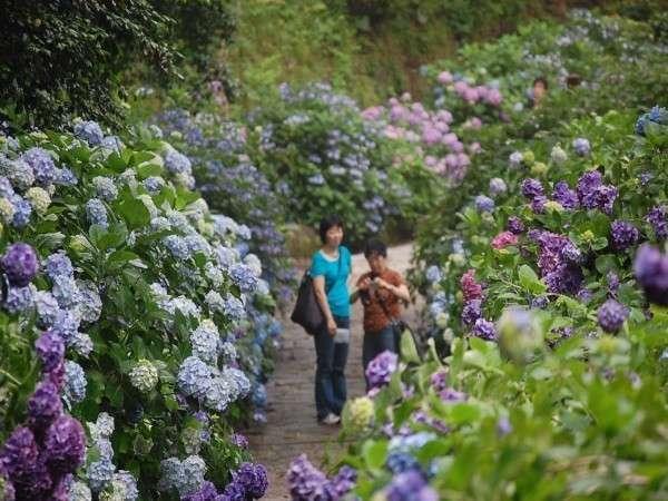 6月は下田公園あじさい祭り