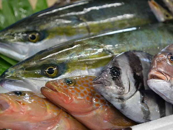 天然の活けすとも言われる 富山湾の朝採れ魚