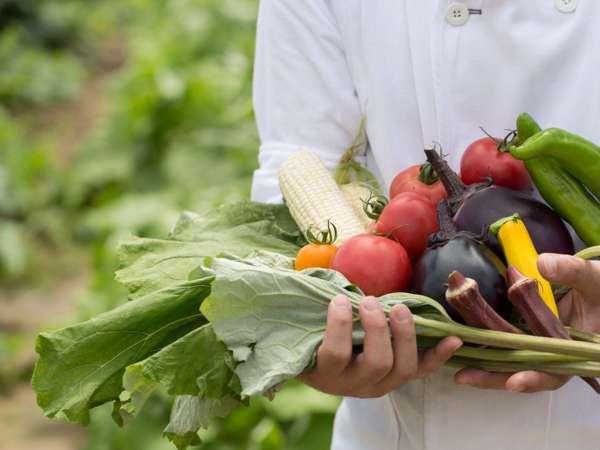 Luigans Farmで取れた新鮮野菜