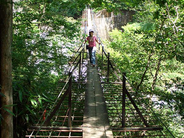 *新緑がまぶしい夏は涼。避暑に最適で、山歩きもおススメの季節!
