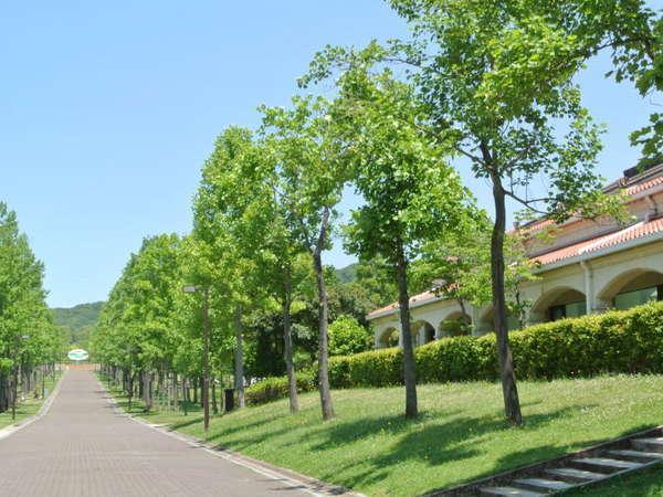 しあわせの村内 中央緑道(初夏)