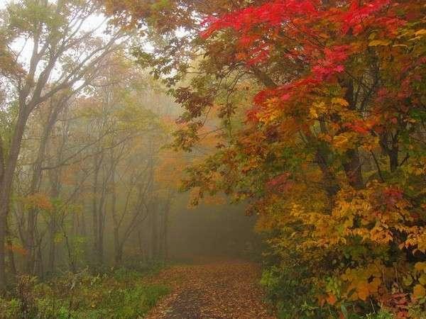 鮮やかな錦秋のトレイル