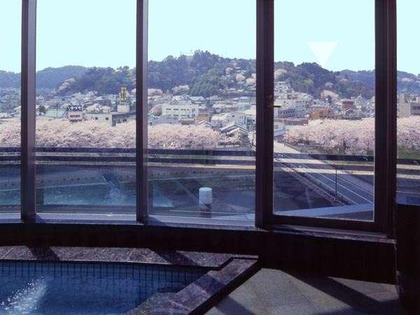 中浴場から春の桜並木を見渡す。