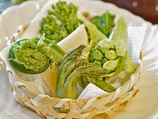 【春の山菜】こごみ、こしあぶら、タラの芽、ぜんまいなど。岩村の春の香りをお届け。