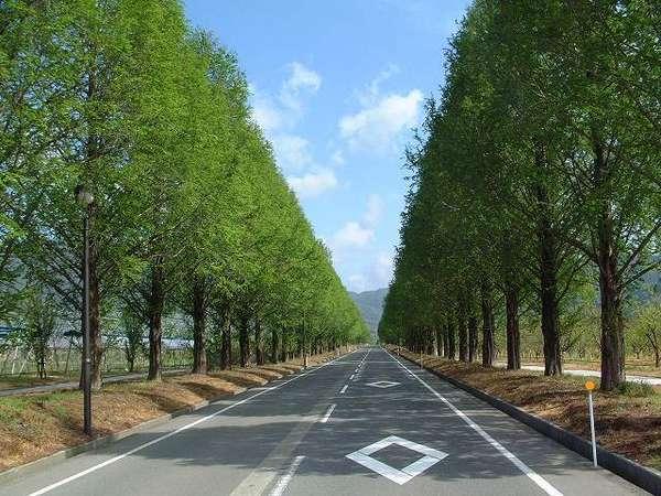 奥琵琶湖の名所「メタセコイア並木」 当館より徒歩1分少々!