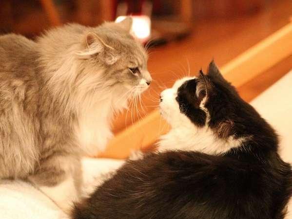 クチコミ大好評♪猫スタッフのおもてなし Instagram#今日のジョアン#今日のコルテス#今日のダヤンさま