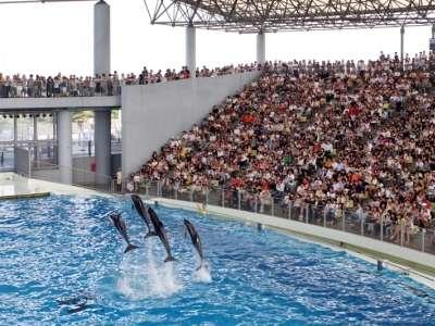 【アクアスタジアム】海の動物たちのショー♪