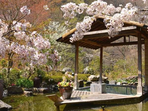 桜の時期は、露天風呂からもお花見満喫~っ♪