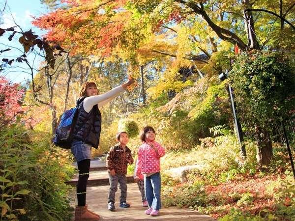 秋のイングリッシュガーデン。どんな秋が見つけられるかな?