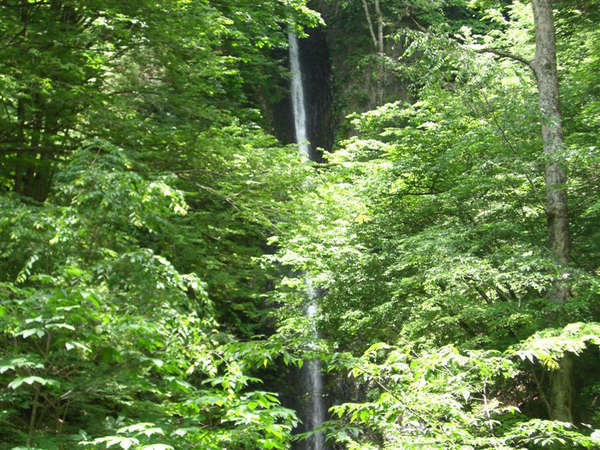 *周辺には観光スポットで人気の白糸の滝がございます。