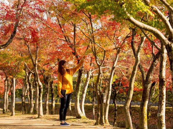 ■丸岡城■紅葉シーズンは丸岡城へお出かけ♪