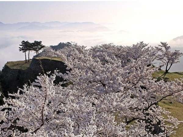 【竹田城跡と桜】